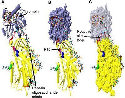 遗传性抗凝血酶Ⅲ缺乏症