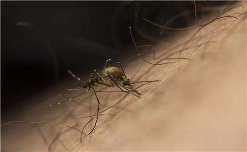 动物源性传染病