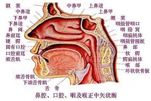 慢性化脓性鼻窦炎
