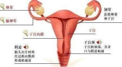 宫颈性不孕