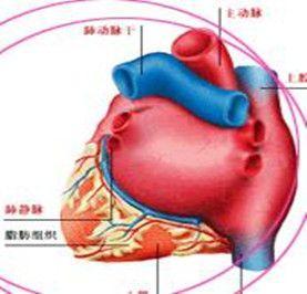 心脏神经症