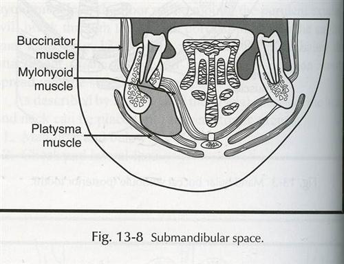 舌下间隙感染
