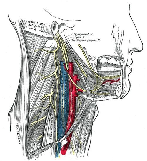 舌咽神经损伤