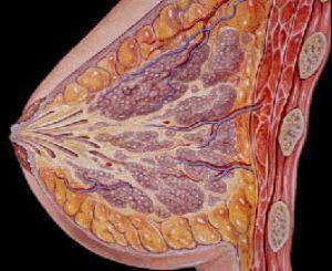 乳腺囊性增生病