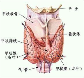 产后甲状腺炎