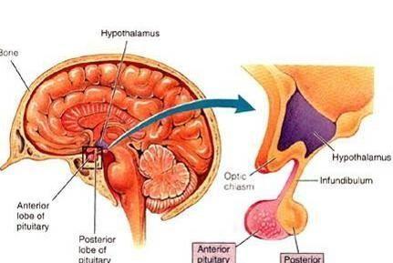 小汗腺血管错构瘤