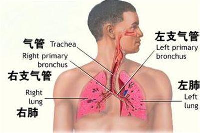病毒性支气管炎