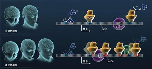 神经系统遗传性病