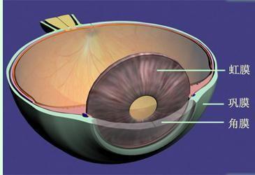 脉络膜恶性黑色素瘤