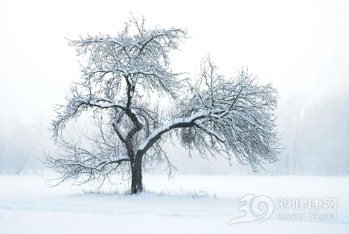 冬天 下雪 雪景_13954207_xxl