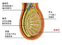 上海哪家医院看附睾炎好