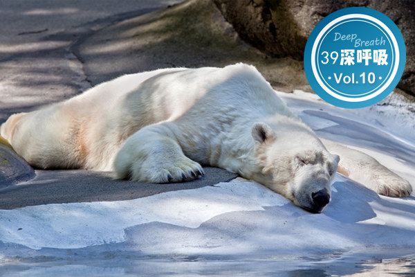 「烧烤模式」下北极熊灭亡是假的,人被热死才是真的
