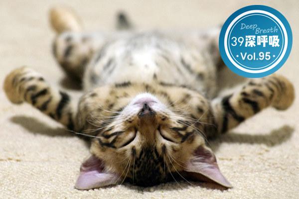 宠物依赖症丨都市人最潮续命大法:今天你吸猫/遛狗了吗?