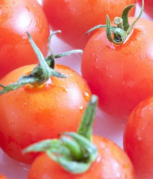 小番茄是转基因食品,吃不得?