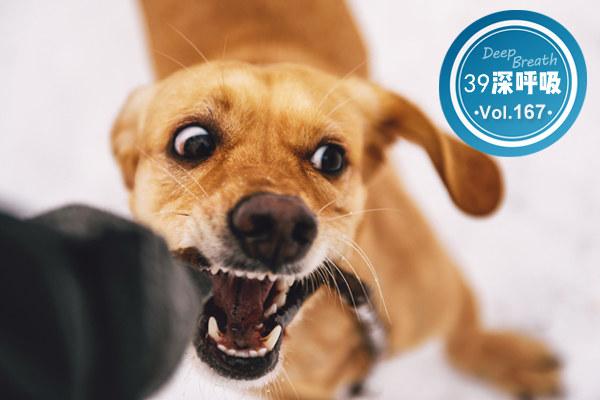 很多人遛狗不拴绳,万一被咬了怎么办?教你正确步骤