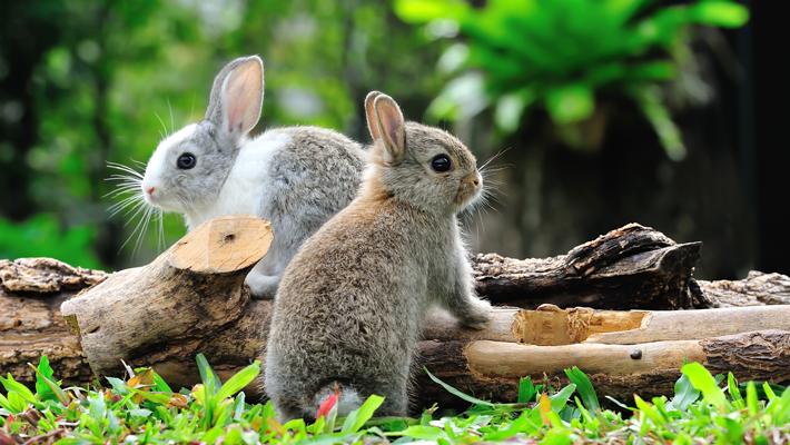哈佛造出人造兔肉,网友:吃人造肉能减肥吗?