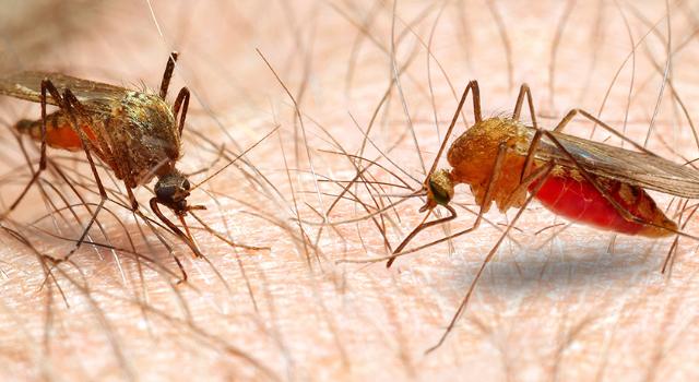 """小小的蚊子,能传播80多种疾病,每年能""""杀死""""70万人!"""